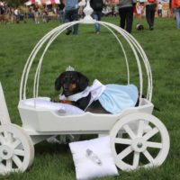 doggie angel carriage
